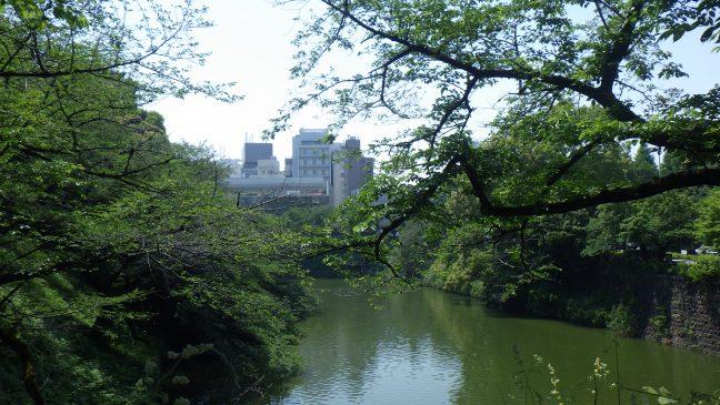 Cherry trees overlook Chidori-ga-fuchi