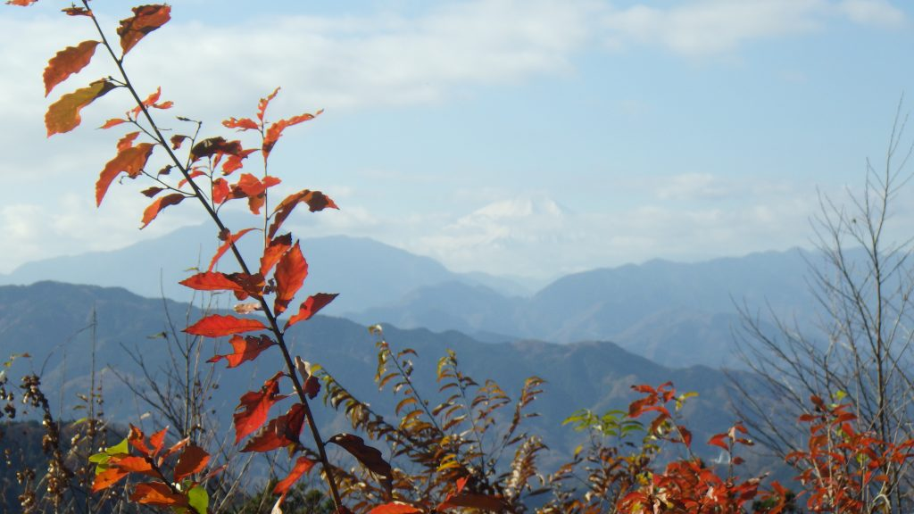 View of Mt Fuji from the peak of Mt Takao