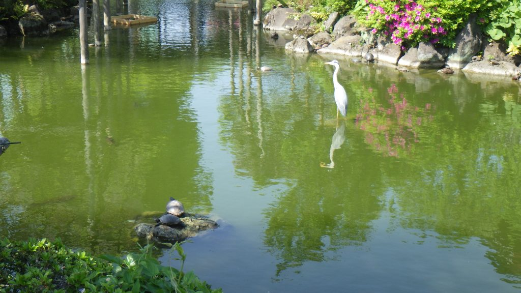 Turtles and Heron