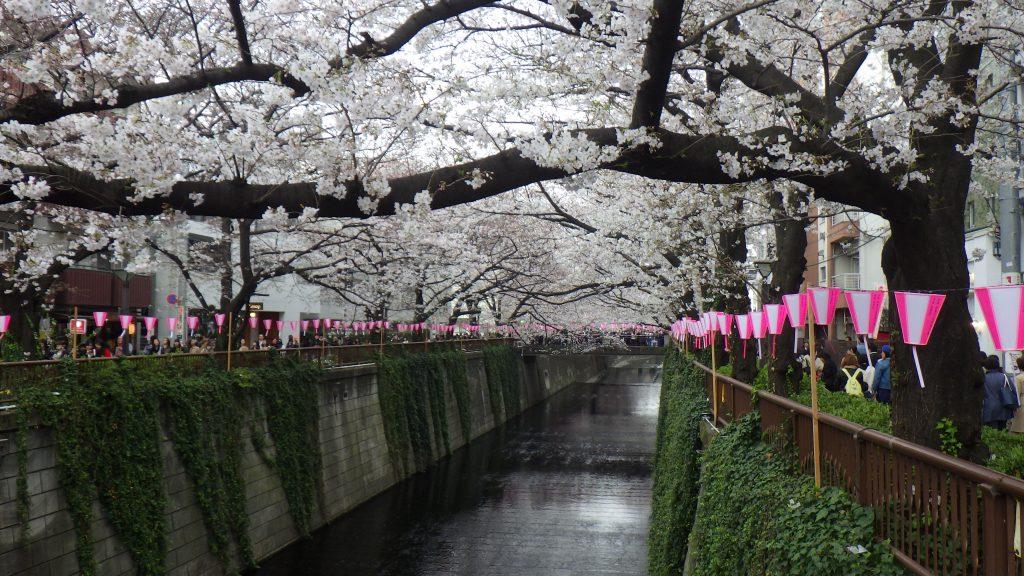 Sakura and lanterns recede into the distance
